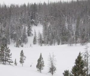 Pinedale-53