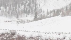 Teton County web-138