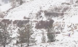 Teton County web-165